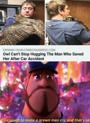 Very Wholesome: EXPAND-YOUR-CONSCIOUSNESS.COM  Owl Can't Stop Hugging The Man Who Saved  Her After Car Accident  t's enough to make a grown man cry, and that's ok Very Wholesome