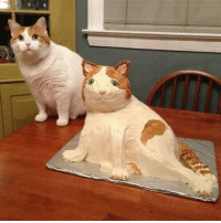 Expectations VS Reality - Cat cake: Expectations VS Reality - Cat cake