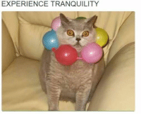 EXPERIENCE TRANQUILITY Catyatta -Udy