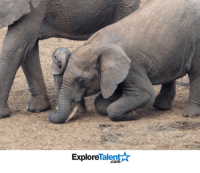 Animals, Memes, and Wow: Explore  alen  .com Big sister drops to her knees to show affection to her newborn sibling 🐘😍🐘😍  Wow Amazing Animals