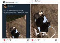 Cats, Wholesome, and Pad: Explore  daddyblessinngs Follow  @AwwwwCats  I put a heating pad out for the  neighborhood cats. I think they like it. <p>Wholesome cats</p>