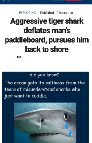 Misunderstood cuddle bunnies.: EXPLORING· Published 10 hours ago  Aggressive tiger shark  deflates man's  paddleboard, pursues him  back to shore  did you know?  The ocean gets its saltiness from the  tears of misunderstood sharks who  just want to cuddle. Misunderstood cuddle bunnies.