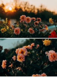 Tumblr, Blog, and Nature: expressions-of-nature:  by Irina Kostenich