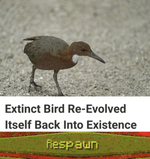 Meme, Reddit, and Back: Extinct Bird Re-Evolved  Itself Back Into Existence  fespaun Very original meme