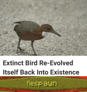 Meme, Back, and Existence: Extinct Bird Re-Evolved  Itself Back Into Existence  fiespaun Very original meme