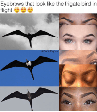 Eyebrows that look like the frigate bird in  flight  @PabloPiqasso ➡️Follow me @savageryfam for funny memes 😂