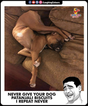 Never, Indianpeoplefacebook, and Dog: f  0, 8)/LaughingColours  LAUGHING  NEVER GIVE YOUR DOG  PATANJALI BISCUITS  I REPEAT NEVER