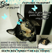 Get Cat Spayed For Free Nyc