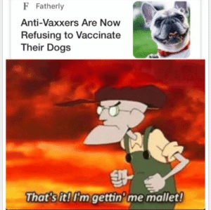 Dogs, Memes, and Anti: F Fatherly  Anti-Vaxxers Are Now  Refusing to Vaccinate  Their Dogs  That's it!I'm gettin'me mallet!