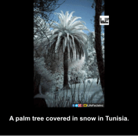 Memes, 🤖, and Tunisia: f GogLifeFactslnc  A palm tree covered in snow in Tunisia.