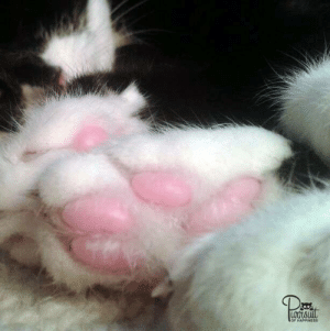 Memes, Happiness, and 🤖: F HAPPINESS This is me, Smith! These are my little jelly-bean toes :) #HumpDay #catnapping #catswillbecats #paws #KPOHKitties