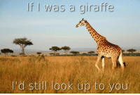 Giraffe, Wife, and All: f I was a giraffe  ld still look up to you <p>I originally made this for my wife, but it applies to all of you as well</p>