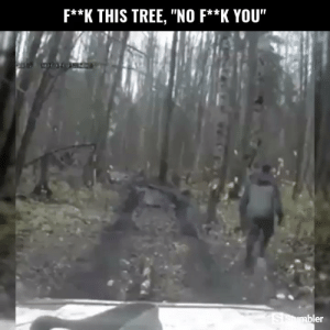 """Funny, Memes, and Videos: F**K THIS TREE, """"NO F**K YOU""""  er RT @StumblerFunny: For more funny videos follow @StumblerFunny or visit https://t.co/wXxwpgKuO7 https://t.co/jbTIln2oVw"""