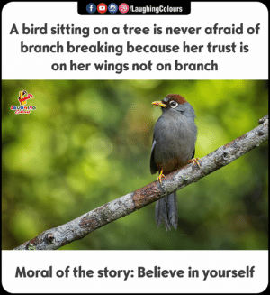 Good Morning, Good, and Tree: f )/LaughingColours  A bird sitting on a tree is never afraid of  branch breaking because her trust is  on her wings not on branch  AUGHING  Moral of the story:Believe in yourself Good Morning :) #SelfBelief