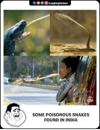 India, Snakes, and Indianpeoplefacebook: f O/LaughingColours  SOME POISONOUS SNAKES  FOUND IN INDIA