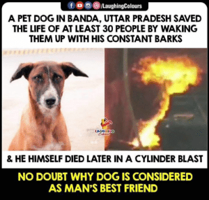 Best Friend, Life, and Best: f oo )/LaughingColours  A PET DOG IN BANDA, UTTAR PRADESH SAVED  THE LIFE OF AT LEAST 30 PEOPLE BY WAKING  THEM UP WITH HIS CONSTANT BARKS  LAUGHING  & HE HIMSELF DIED LATER IN A CYLINDER BLAST  NO DOUBT WHY DOG IS CONSIDERED  AS MAN'S BEST FRIEND