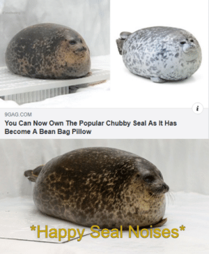*Happy Seal Noises*: F realfeeling  i  9GAG.COM  You Can Now Own The Popular Chubby Seal As It Has  Become A Bean Bag Pillow  *Happy Seal Noises *Happy Seal Noises*