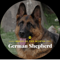 Check out our breed of the month the German Shepherd.: F THE MONTH  BREED  German Shepherd Check out our breed of the month the German Shepherd.