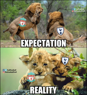 Memes, Liverpool F.C., and Reality: f TrollFootball  TheFootballTroll  LIVERPOOL  EST-18  EXPECTATION  f TrollFootball  O TheFootballTroll  J 8Gkt  LIVERPOOL  EST-1892  REALITY Accurate!! https://t.co/7QJd1lPVeD