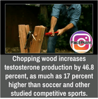 did you know fact point , education amazing dyk unknown facts daily facts💯 didyouknow follow follow4follow f4f factpoint instafact awesome world worldfacts like like4ike tag friends Don't forget to tag your friends 🤘: Fac Point  Chopping wood increases  testosterone production by 46.8  percent, as much as 17 percent  higher than soccer and other  studied competitive sports. did you know fact point , education amazing dyk unknown facts daily facts💯 didyouknow follow follow4follow f4f factpoint instafact awesome world worldfacts like like4ike tag friends Don't forget to tag your friends 🤘