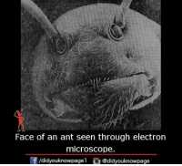 Electronical: Face of an ant seen through electron  microscope.  /didyouknowpagel  @did youknowpage