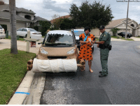 YABBA-DABBA-DON'T: When Florida police came across a smart car tricked out as The Flintstones' car - complete with a driver dressed up like Fred - they took the opportunity to stage this funny (but fake) ticketing scene.: Facebock/Pasco Sheriff's Office YABBA-DABBA-DON'T: When Florida police came across a smart car tricked out as The Flintstones' car - complete with a driver dressed up like Fred - they took the opportunity to stage this funny (but fake) ticketing scene.