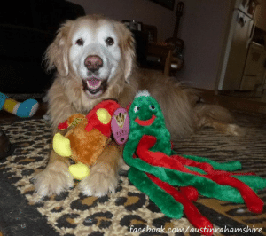 """Well look at this. We've made it to another Tuesday! You know what that means? """"Kiss Me Tuesday""""! I'm bringing kisses for all my wonderful friends. I hope you don't mind, I brought some of my stuffies. Who wants kisses from us? #KMT: facebook.com/austinrahamshire Well look at this. We've made it to another Tuesday! You know what that means? """"Kiss Me Tuesday""""! I'm bringing kisses for all my wonderful friends. I hope you don't mind, I brought some of my stuffies. Who wants kisses from us? #KMT"""