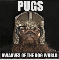 DnD: Facebook.com/DnD Memes  PUGS  DWARVES OF THE DOG WORLD