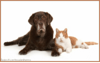 The sweetest Millie with - partner in crime- Hannes <3: Facebook.com/hesselandhannes The sweetest Millie with - partner in crime- Hannes <3