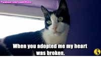 Cats, Kitties, and Memes: Facebook.com/LandOfCats  When you adopted me my heart  Was broken. Please consider a senior cat the next time you are adopting. I LOVE ALL CATS but in some cases, senior kitties may actually work out better. They are more patient, usually have been the same environment as another cat or dog so they could adjust to a multipet family. They are calmer, good around kids and purrfect if you are a senior yourself :-) if you are older yourself. thanks to Land of Cats for this video