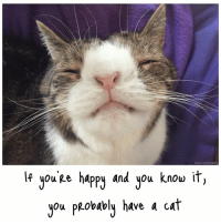 Can YOU relate? 😁😸💜 thedailykitten ilovemycat cat catstagram huffingtonpost smile: Facebook.com/MontyBoy Cat  lf you ge happy and you know it  you PRobably have a cat Can YOU relate? 😁😸💜 thedailykitten ilovemycat cat catstagram huffingtonpost smile
