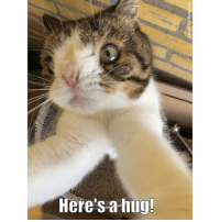 Memes, Mondays, and Monday: Facebook.com/MontyBoyCat In case you need a hug today here's one from me to you! Happy Monday 😸💜🎉 ShareAHug SpreadingLoveOnAMonday
