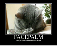 facepalm: FACEPALM  Even your cat knows that was stupid
