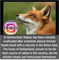 Memes, Switzerland, and Swiss: FacEPoint  In Switzerland, Rabies has been virtually  eradicated after scientists placed chicken  heads laced with a vaccine in the Swiss Alps.  The foxes of Switzerland, proven to be the  main source of rabies in the country, ate the  chicken heads and immunized themselves. did you know fact point , education amazing dyk unknown facts daily facts💯 didyouknow follow follow4follow f4f factpoint instafact awesome world worldfacts like like4ike tag friends Don't forget to tag your friends 🤘