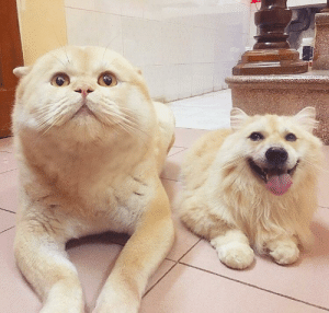 Gone, Right, and Faceswap: Faceswap gone right