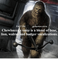 🔹Favorite sound in Star Wars?🔹 - starwars stormtrooper firstorderstormtrooper superbowl swtfa jedi sith more movie me cool instagood dc marvel follow like awesome nerd geek nerdness force jedi sith: FACT 154  starwars trivia  Chew bacca's voice is a blend of bear  lion, walrus and badger vocalizations. 🔹Favorite sound in Star Wars?🔹 - starwars stormtrooper firstorderstormtrooper superbowl swtfa jedi sith more movie me cool instagood dc marvel follow like awesome nerd geek nerdness force jedi sith