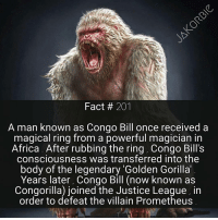 Memes, The Ring, and Planet of the Apes: Fact 20  A man known as Congo Bill once received a  magical ring from a powerful magician in  Africa. After rubbing the ring, Congo Bill S  consciousness was transferred into the  body of the legendary Golden Gorilla  Years later, Congo Bill (now known as  Congorilla) joined the Justice League, in  order to defeat the villain Prometheus This reminds me ~ Would you guys like some Planet of the Apes facts ? - - - DC Comics Congorilla JusticeLeague Batman Superman WonderWoman Aquaman TheFlash Cyborg GreenLantern Nightwing SuicideSquad HarleyQuinn Deadshot KillerFrost Deathstroke DamianWayne TimDrake RedHood Batgirl Supergirl GreenArrow Starfire DCEU DCRebirth DCComics