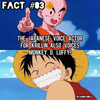 Dragonball, Memes, and Krillin: FACT #83  THE JAPANESE VOICE ACTOR  FOR KRILLIN ALSO VOICES  MONKEY D, LUFFY!  eYAHBOYGOKU Did you know? 🤔🐲🉐 DragonBall DBZfact DBZ
