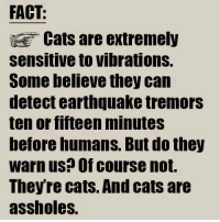 Tremors: FACT:  Cats are extremely  Sensitive to vibrations.  Some believe they can  detect earthquake tremors  ten or fifteen minutes  before humans. But do they  warn us? Of course not.  Theyre cats. And cats are  assholes.