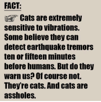 Cats Are Assholes: FACT:  Cats are extremely  sensitive to vibrations.  Some believe they can  detect earthquake tremors  ten or fifteen minutes  before humans. But do they  warn us? Of course not.  Theyre cats And cats are  assholes.