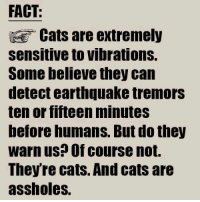 Cats Are Assholes: FACT:  Cats are extremely  Sensitive to Vibrations.  Some believe they can  detect earthquake tremors  ten or fifteen minuteS  before humans. But do they  Warn us? Of course not.  Theyre cats. And cats are  assholes.