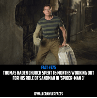 Facts, Memes, and Sandman: FACT H375  THOMAS HADENCHURCHSPENT16 MONTHSWORKING OUT  FOR HIS ROLE OF SANDMAN IN SPIDER-MAN 3  DWALLCRAWLERFACTS Man pretty much everyone had to get in shape to be in Spider-Man 3😂 • spiderman peterparker marvel mcu marvelfacts marvelfact tomholland andrewgarfield tobeymaguire gwenstacy maryjanewatson venom amazingspiderman marveluniverse marvelcomics sony 20thcenturyfox superhero supervillain hero villain