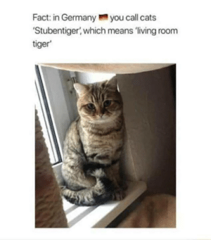 How do you say 'cat' in your native language?: Fact: in Germanyyou call cats  Stubentiger, which means 'living room  tiger How do you say 'cat' in your native language?