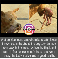 Alive, Memes, and 🤖: Fact Point  A street dog found a newborn baby after it was  thrown out in the street, the dog took the new  born baby in the mouth Without hurting it and  put it in front of someone's house and went  away, the baby is alive and in good health did you know fact point , education amazing dyk unknown facts daily facts💯 didyouknow follow follow4follow f4f factpoint instafact awesome world worldfacts like like4ike tag friends Don't forget to tag your friends 🤘