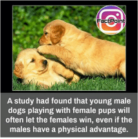 Its natural gesture 😋: Fact Point  A study had found that young male  dogs playing with female pups will  often let the females win, even if the  males have a physical advantage. Its natural gesture 😋