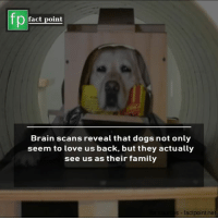 Scans: fact point  Brain scans reveal that dogs not only  seem to love us back, but they actually  see us as their family  s factpoint.net