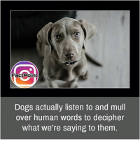 Dogs, Facts, and Friends: Fact Point  Dogs actually listen to and mull  over human words to decipher  what we're saying to them They're always awesome ❤ did you know fact point , education amazing dyk unknown facts daily facts💯 didyouknow follow follow4follow earth science commonsense f4f factpoint instafact awesome world worldfacts like like4ike tag friends Don't forget to tag your friends 👍
