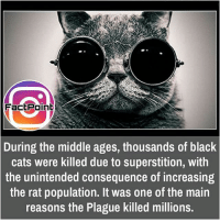 Memes, Maine, and Superstition: Fact Point  During the middle ages, thousands of black  cats were killed due to superstition, With  the unintended consequence of increasing  the rat population. It was one of the main  reasons the Plague killed millions. did you know fact point , education amazing dyk unknown facts daily facts💯 didyouknow follow follow4follow f4f factpoint instafact awesome world worldfacts like like4ike tag friends Don't forget to tag your friends 🤘