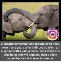 Facts, Friends, and Memes: Fact Point  Elephants remember and mourn loved ones,  even many years after their death. When an  elephant walks past a place that a loved one  died he or she will stop and take a silent  pause that can last several minutes. did you know fact point , education amazing dyk unknown facts daily facts💯 didyouknow follow follow4follow earth science commonsense f4f factpoint instafact awesome world worldfacts like like4ike tag friends Don't forget to tag your friends 👍