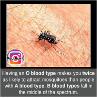 Memes, 🤖, and Page: Fact Point  Having an o blood type makes you twice  as likely to attract mosquitoes than people  with A blood type. B blood types fall in  the middle of the spectrum Follow our page for more Facts 😇 Don't forget to tag your friends 💖